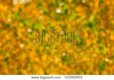 Blurred autumn background of yellowed autumn leaves in sunny weather. Defocused autumn leaves - autumn natural blurred background. Autumn blurred background of golden leaves