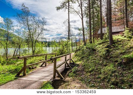 Forest Path To A Wooden Hut In The Alps