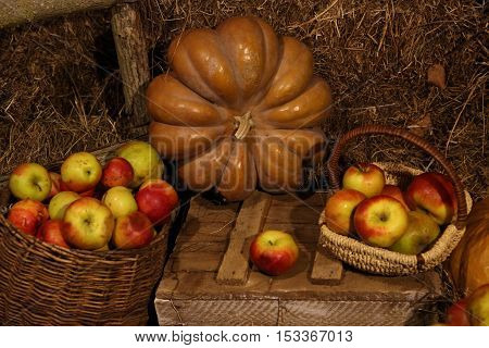 big ripe pumpkins lying on straw and red apples in the basket