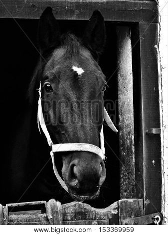Horse, horse head, gray horse, a beautiful horse, a horse looking from stable.