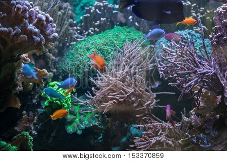 Tropical fish at the Great Barrier Reef. Sea life.