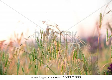 Beautiful Rural Landscape With Sunrise Over A Meadow. Soft Focus. The Idea Of The Background Of Moth