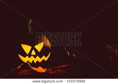Glowing Pumpkin Symbolizing The Head Of Old Jack, With Autumn Leaves Night In A Spooky Dark Backgrou
