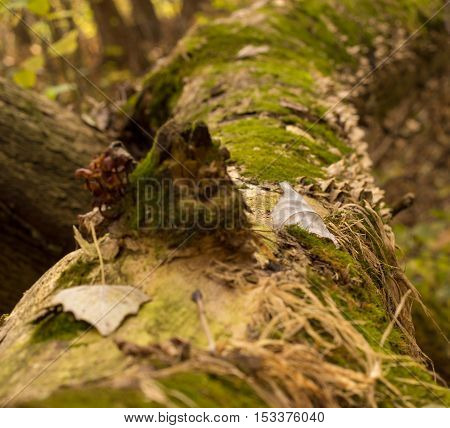 wonders of the autumn forest very beautiful landscape tree covered with moss and on it grows a lot of mushrooms