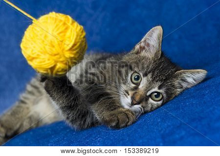 Cat with yellow woolen ball, little grey tabby kitty playing with skein of tangled colorful sewing threads on blue background
