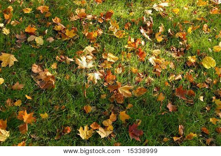Autumn leaves on green grass background