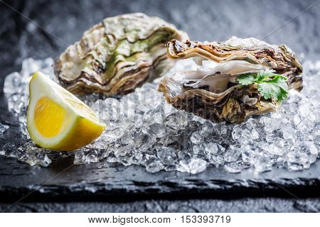 Closeup of tasty oysters on ice with lemon