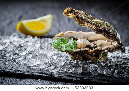 Closeup of freshly caught oysters on crushed ice