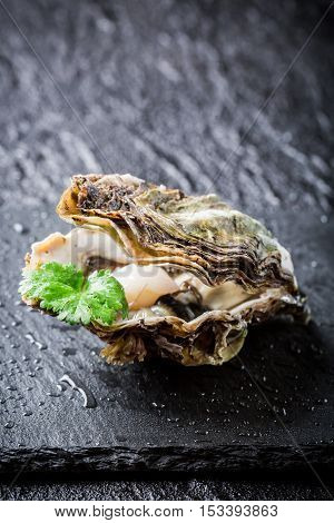 Freshly Caught Oyster In Shell On Ice