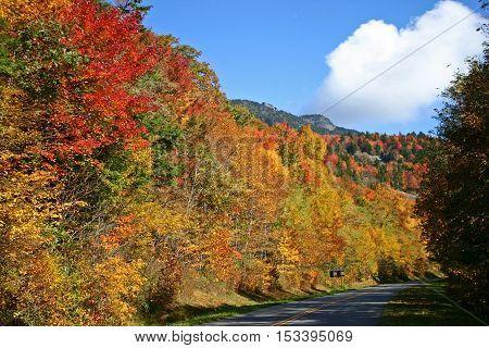 spectacular autumn foliage along the Blue Ridge Parkway in North Carolina