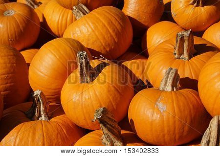 close up on stacking pumpkin in harvest season