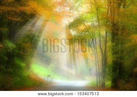 Road covered with sun rays and fog in autumn time