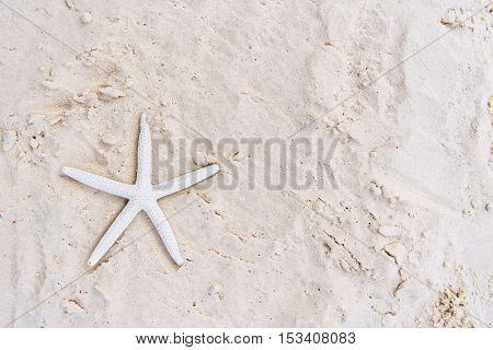 Starfish Sand Summer Holiday Vacation Beach Concept