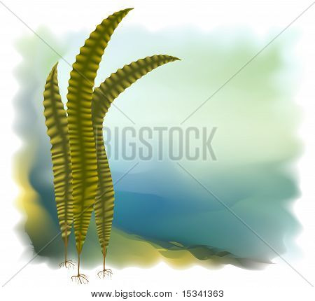 Japanese Kelp (laminari). Vector Illustration.