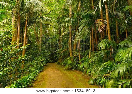 Footpath in a dense rainforest. Biological park diversity on volcanic island of Azores Portugal.