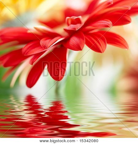 Gänseblümchen-Gerbera mit weicher Fokus im Wasser reflektiert rot