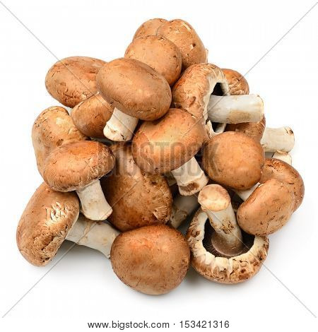 Collection champignon isolated on white background.