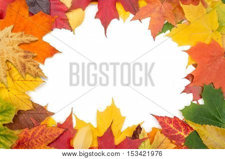 Background with colorful autumn leaves and white copyspace in the center
