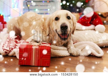 Cute dog lying on plaid with Christmas gift. Snowy effect, Christmas celebration concept.