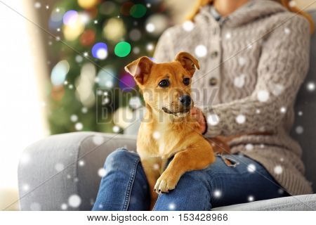 Woman holding cute puppy on knees against blurred Christmas tree background. Snowy effect, Christmas celebration concept.
