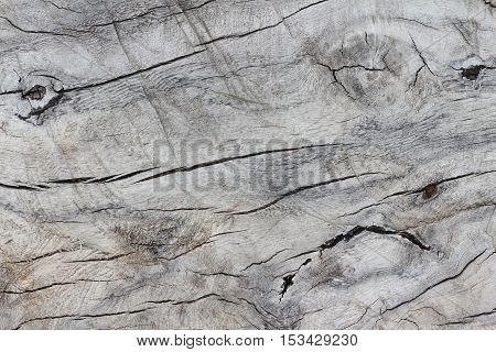 Tree stump with cracks, texture or background