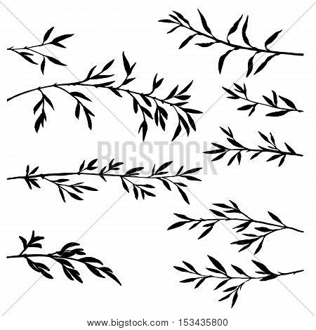 set of tree branches with leaves, bamboo shoots, isolated hand drawn vector elements