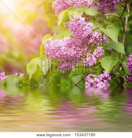 Branch of lilac flowers with the leaves, vintage retro hipster image with sunshine and water reflection, seasonal spring holiday background
