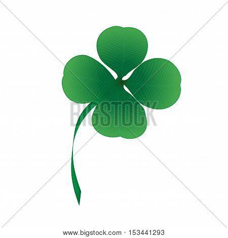 Vector four leaf clover on white background - illustration