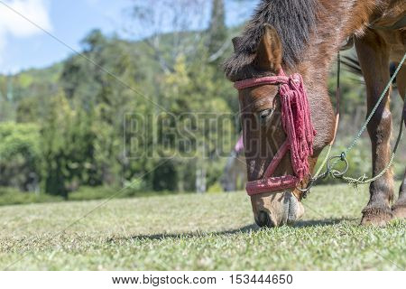 Horse eating grass on the ground. Life in nature