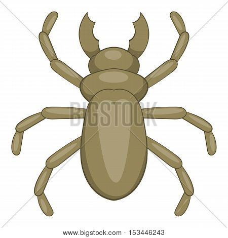Beetle woodworm icon. Cartoon illustration of beetle woodworm vector icon for web