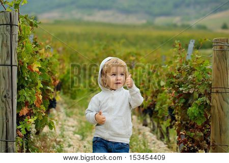 Cute baby boy child with curly blond curly hair in gray hoody and jeans shows cool on vineyards background