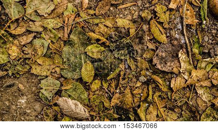 Yellow leaves, dried leaves, colors of fall, autumn, autumn background, dry leaves background, pile of dry leaves