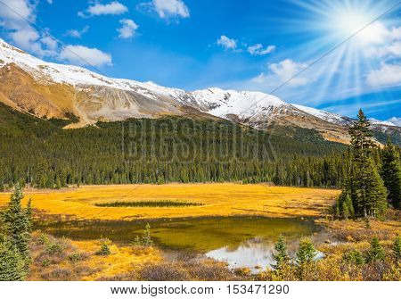 Waterlogged valley in the Canadian Rockies. Bright sunny day. The concept of an active and eco-tourism