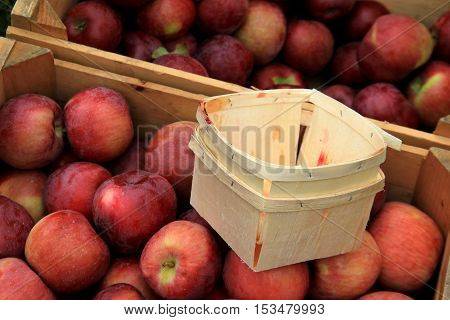 Wood crates and pint containers filled with freshly picked crop of  apples at local orchard.