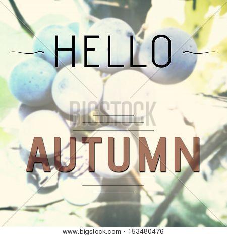 Hello Autumn Inspirational Words
