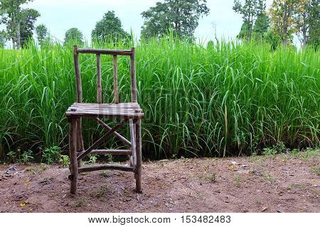 Wooden chair on rice plant background. countryside in thailand.