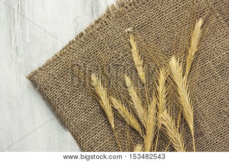 A photo of oat crops, shot from above on a rustic wooden background texture with copyspace