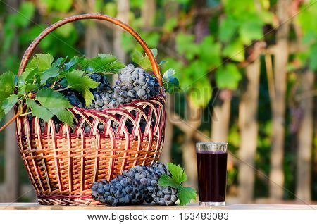 Full basket of ripe grapes and a glass of juice in the garden on a background of the vine