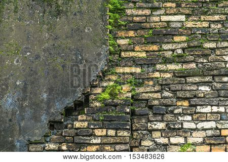 plaster has cracked to reveal a worn brick wall that covered with moss and vegetation growing out of it street wall background texture .