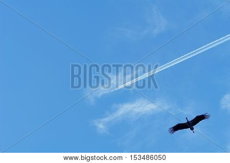 plane and a stork fly against the sky