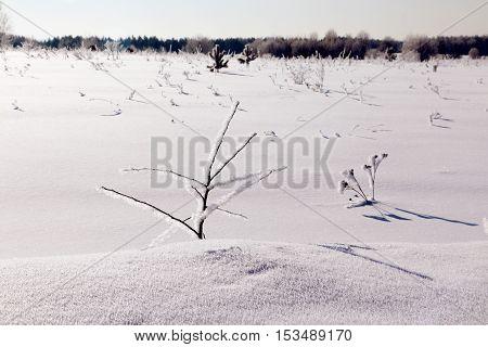 Field Full Of Snow
