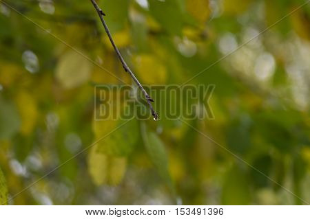 Close up of a branch with a raindrop in the autumn time