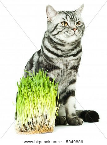A vegeterian cat
