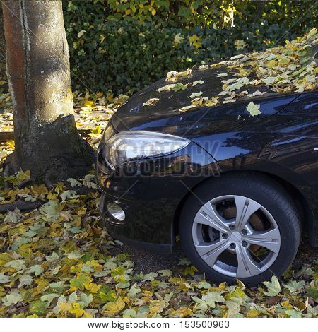 black car covered in fallen yellow autumn leaves from maple tree in the fall