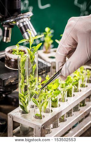 University Laboratory Testing Of Pesticides On Plants