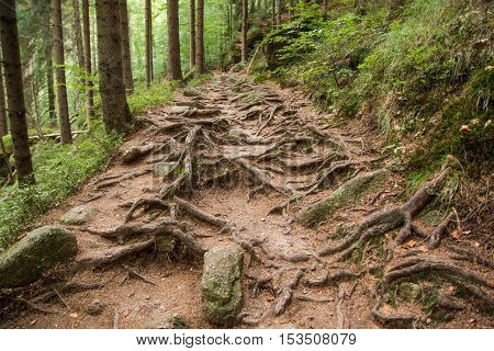 Tourist path in the deep green forest Chech Republic