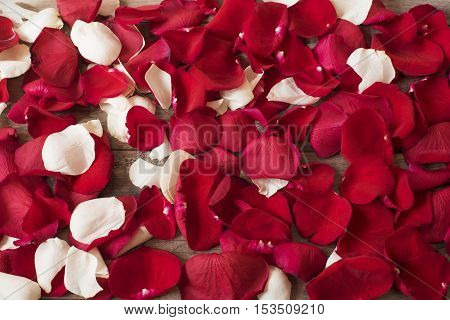 Close Up Of Red And White Rose Petals On Wooden Background. Floral Background. Red Rose Stock Photog