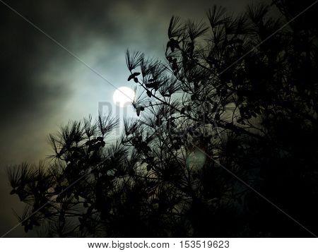 Dark cloudy full moon behind a pine tree silhouette