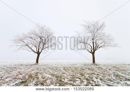 Trees on a snowy field