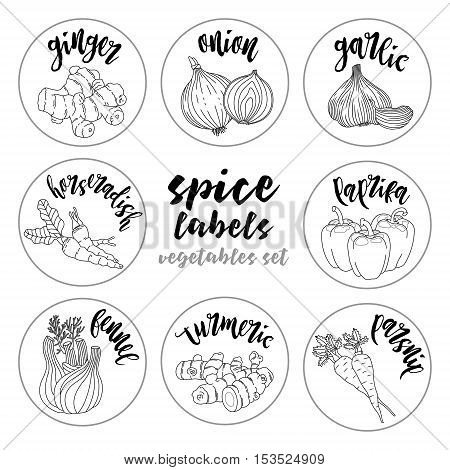 Spices and herbs jar labels and stickers. Contour vector condiment vegetables set with ginger, onion, garlic, horseradish, paprika, fennel, turmeric, parsnip. Botanical illustrations